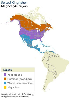 Belted Kingfisher Range Map