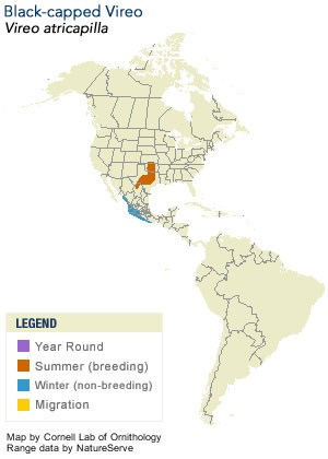 Black-capped Vireo Range Map