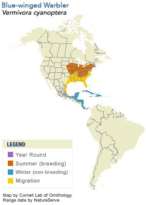 Blue-winged Warbler Range Map