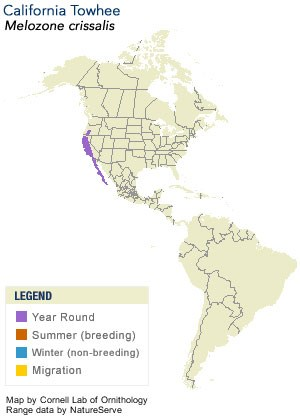 California Towhee Range Map