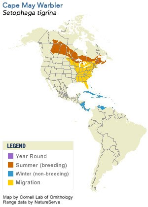 Cape May Warbler Range Map