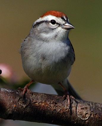 sparrows michael vladimirovich casino royal
