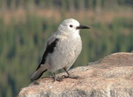 Clarks Nutcracker Photo