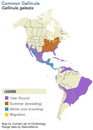 Common Gallinule Range Map