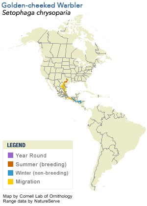 Golden-cheeked Warbler Range Map