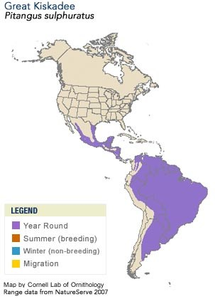 Great Kiskadee Range Map