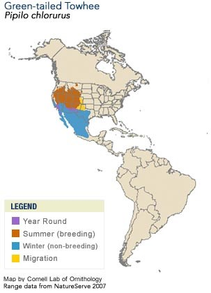 Green-tailed Towhee Range Map