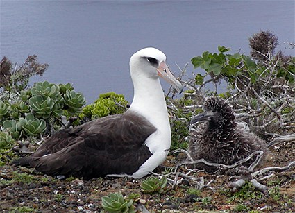 Adult and chick
