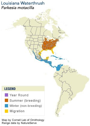 Louisiana Waterthrush Range Map