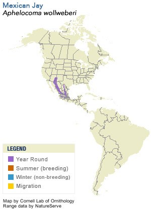 Mexican Jay Range Map