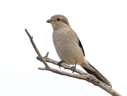 Boletas  guest house  nature tours  birding tours