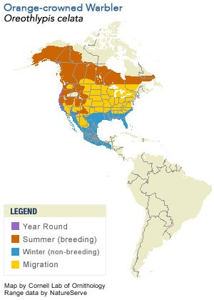 Orange-crowned Warbler Range Map