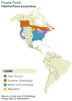 Purple Finch Range Map
