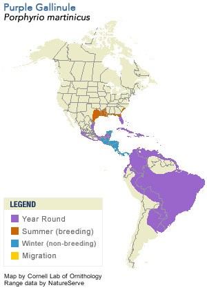 Purple Gallinule Range Map
