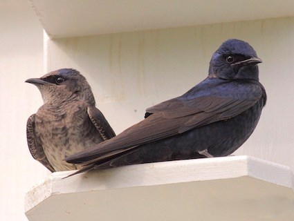 Adult female and male