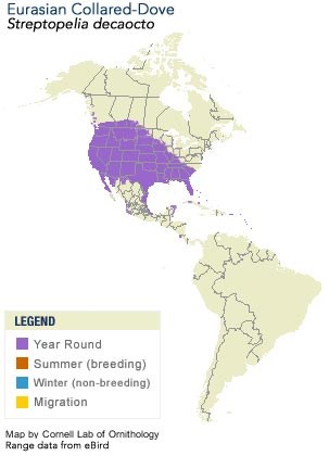 Eurasian Collared-Dove Range Map
