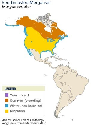 Red-breasted Merganser Range Map