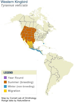 Western Kingbird Range Map