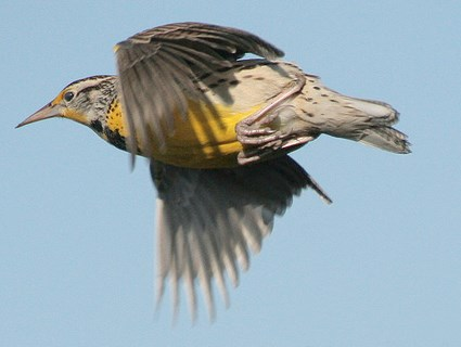 Adult in flight