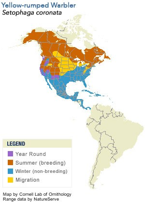 Yellow-rumped Warbler Range Map