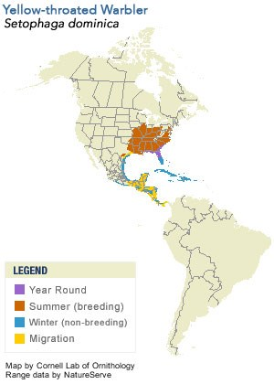 Yellow-throated Warbler Range Map