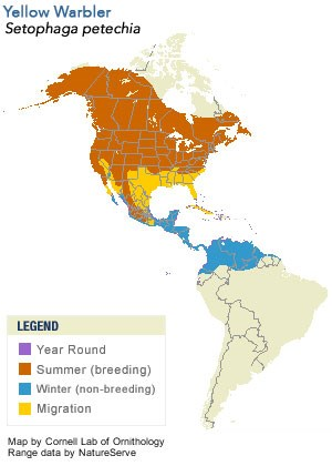 Yellow Warbler Range Map